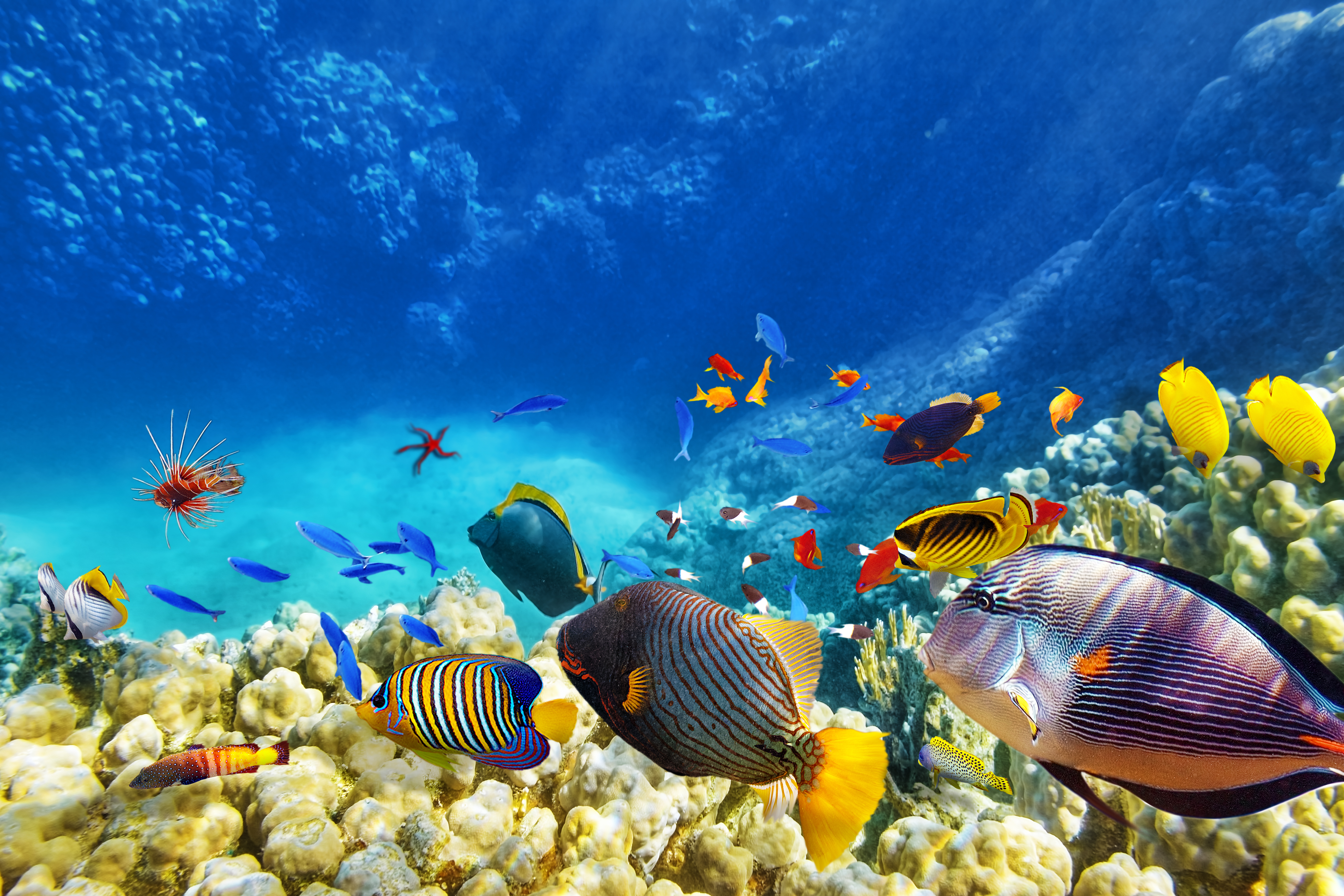 Expedia cruiseshipcenters ovc for Great barrier reef fish